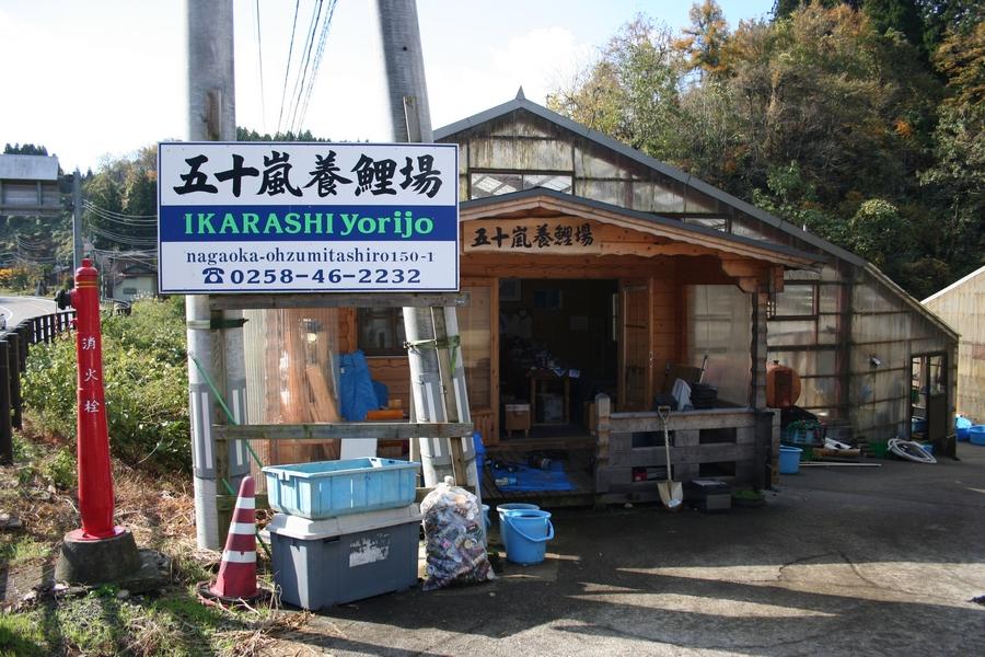 Japan 2012-Ikarashi-Koifarm