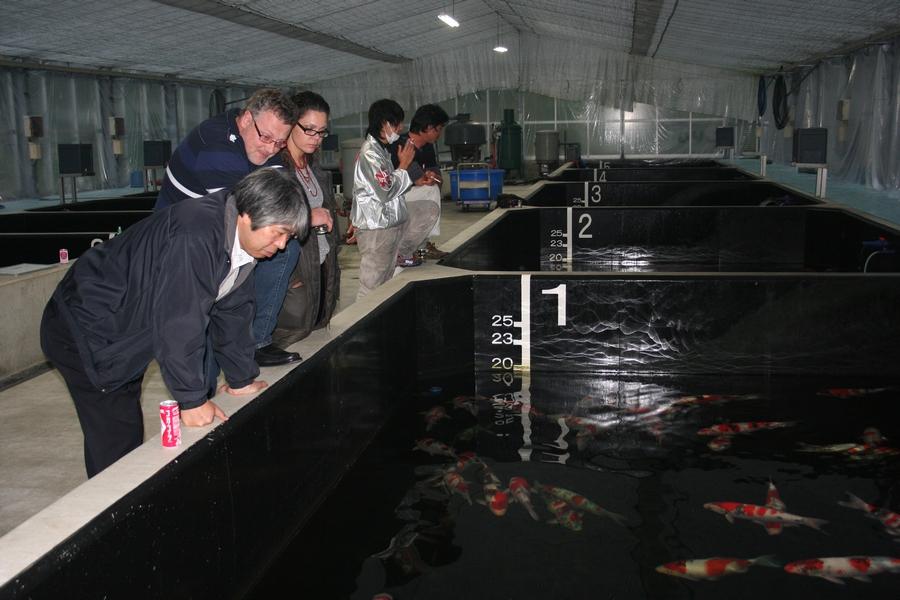 Japan 2012- Dainichi-Koifarm-23