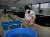 Japan 2012 Dainichi