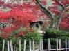 Japan-Koi-Einkaufsreise-kyoto18